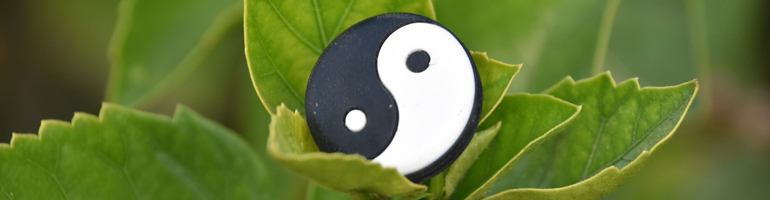 A yin and yang symbol sits in a leaf, the background contains green forestry.